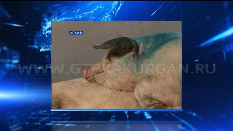 Из-за чумы свиней вКургане закрыли Центральный рынок